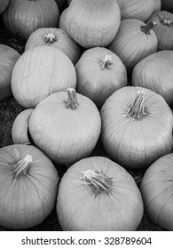 Black and white image of a group of pumpkins in a pumpkin patch