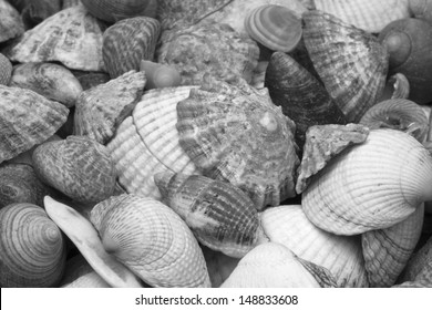 Black and white image of mixed sea shells