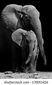 Black & White image of a mother elephant protecting her baby