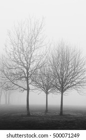 Black and white image of and outline of trees in a park in the fog and mist in winter
