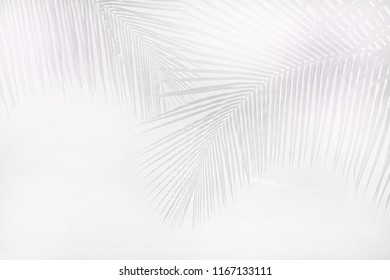 black and white image of palm leaves tree over empty space sky - abstract background