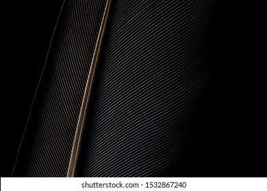 Black and white image of a piece of bird feathers, close-up,Black macro feather,Black raven feathers ,Serbia, Feather, Black Color, Crow - Bird,Abstract, Animal Body Part, Animal Pen, Animal Wing