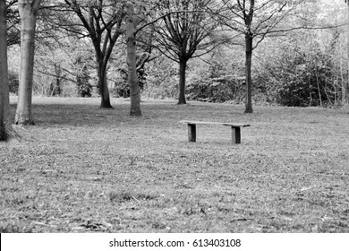 A black and white image from Regent's Park in London, England showing trees, grass and an empty park bench.