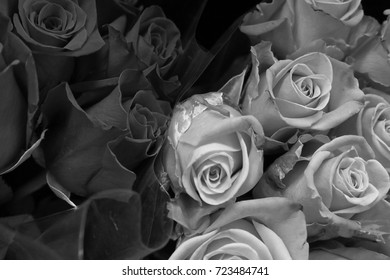 black and white image of roses