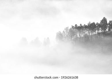 Black and white image of scattered aligned trees with fog lifting.