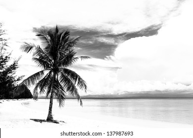 Black and white image of tropical beach