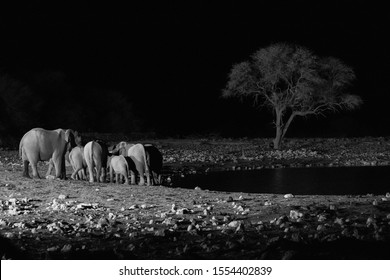 Black and white image at the watering hole in Etosha National Park, Namibia.