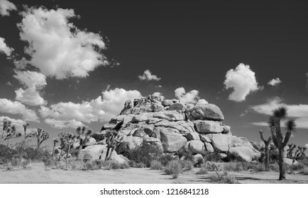 Black and White Joshua Trees and Cliffs