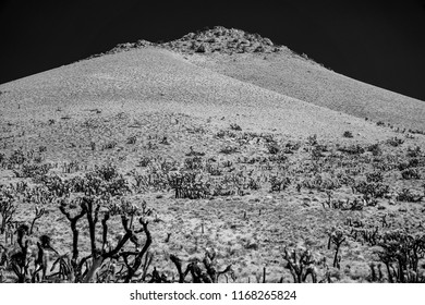 Black and white, Joshua trees on desert mountainside under black sky.