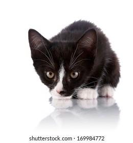 Black and white kitten. Curious kitten. Kitten on a white background. Small predator.