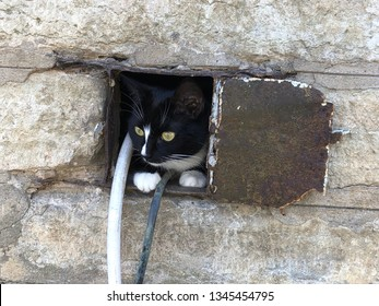 Black and white kitten hiding in a hole in the stone wall.