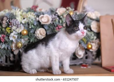 Black and white kitten on Christmas background.