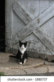 black and white kitty sitting