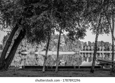 Black and white landscape with birches in the foreground and a pond in the background