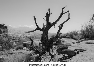 Black and white landscape of a dead tree on the Cliffhanger trail in Moab Utah .  Empty space for text, quote, or saying on sky background.