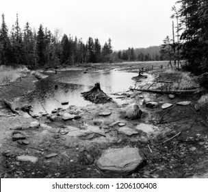Black and white landscape photograph of swampy meadow from an old beaver damn with tree stump.