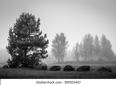 black and white landscape with stones