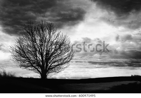 Black and white landscape, tree silhouette with dramatic sky and clouds on the background