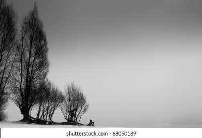 Black and White Landscape of Trees Silhouetted Against a Gray Sky