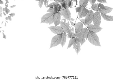 Black and white of the leaves.