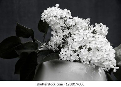 black and white lilac flower photo