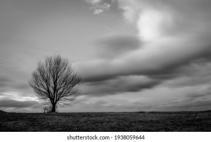 black and white lonely tree against the clouds and sky