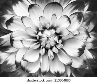 black and white macro shot of flower