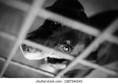 black and white misery eyes dog