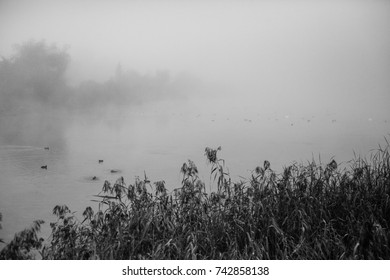 Black and white misty autumn lake