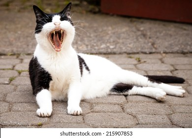 Black and white mixed-breed cat yawning widely and sleepily while lying on paving stones