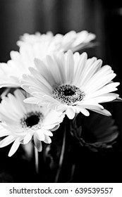 Black and White Monochrome Daisy Flowers