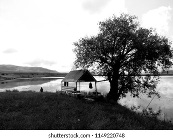 Black and white nature photograpy