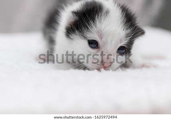 black-white-newborn-kitten-opened-600w-1
