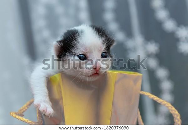 black-white-newborn-kitten-yellow-600w-1