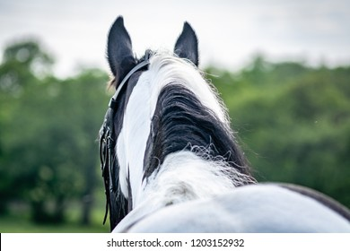 Black and white, painted, coloured, horse