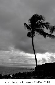 Black and White Palm tree blowing in the wind.
