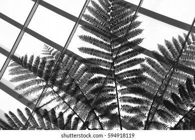 Black and White Palm Tree Silhouette against Grid Window