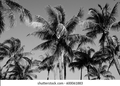 Black and White Palm Trees on the Beach Background Pattern
