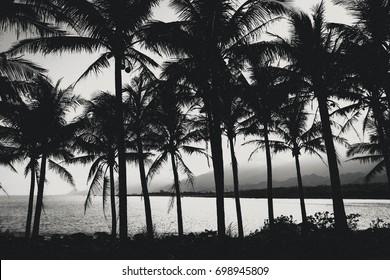 Black and white palm trees, Taitung, Taiwan