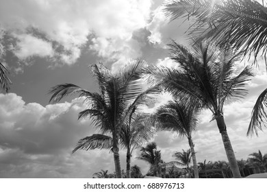 Black White Palms