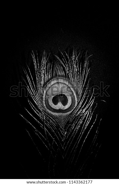 Black White Peacock Feather Wallpaper Stock Photo Edit Now