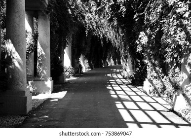 Black and white pergola plant corridor with columns and wooden bars, sunlight making shadow on solid promenade. Beautiful outdoors construction braided by ivy and grape leaves. Grey scale wallpaper.