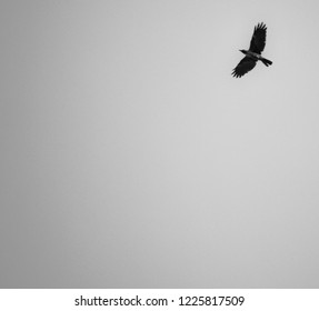 black and white photo for crow flaying