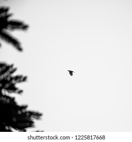 black and white photo for crow flaying near the branch