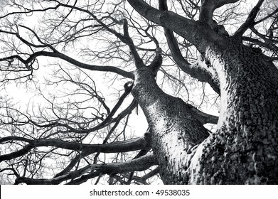 Black and white photo of dead winter tree. Nature conceptual image.