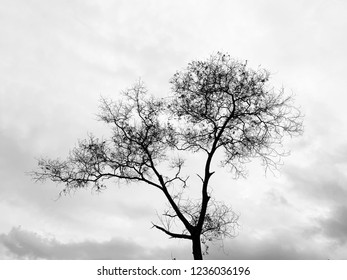 Black and white photo of a dying leafless tree with the cloudy gray sky.