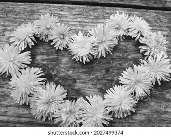 Black and white photo of handpicked dandelions in a heart shape.