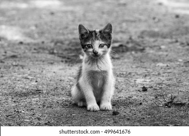 Black and white photo of a homeless kitten