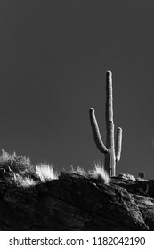 Black and white photo of an isolated saguaro cacti with a gray sky behind it, a fixture of the Sonoran desert, known as the iconic cactus of the American Southwest. Tucson, Arizona. Spring of 2018.