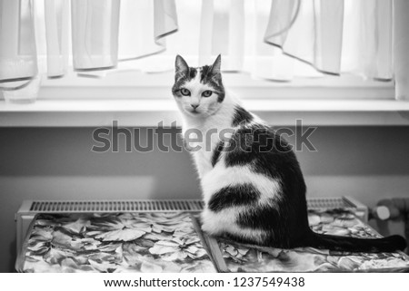 black-white-photo-kitten-contrast-450w-1
